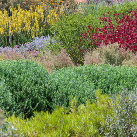 05_Australian-Garden