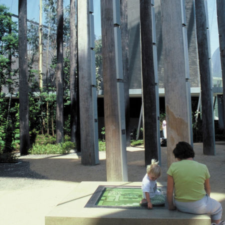 06_Forest-Gallery