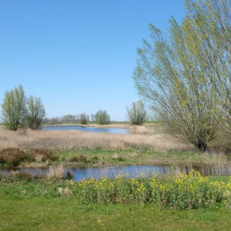 41_Existing wetlands are integrated in the new landscape - photo H+N+S