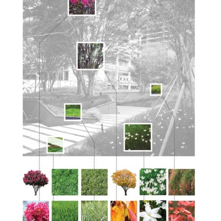Zelkova_Planting Diagram
