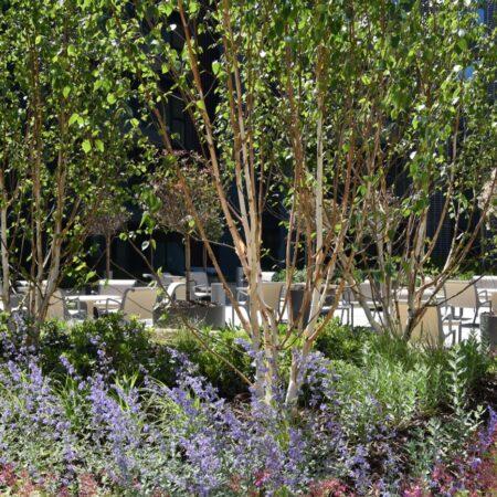 18. Greenwich Square Communal Garden - lush planting 1