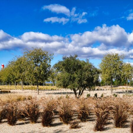 20 NEW GARDENS FOR THE FINANCIAL CITY OF BANCO SANTANDER