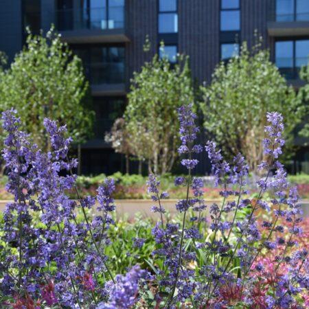 20. Greenwich Square Communal Garden - lush planting 3