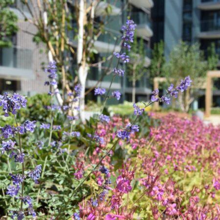 21. Greenwich Square Communal Garden - lush planting 4