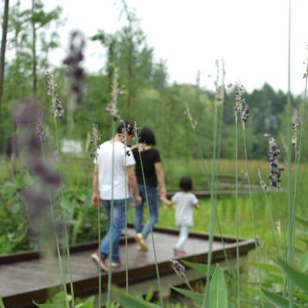3-plat-studio-forest-park-wetland