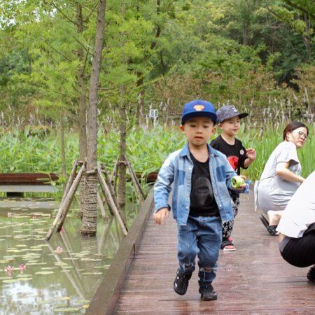 5-plat-studio-forest-park-Wetland-Family