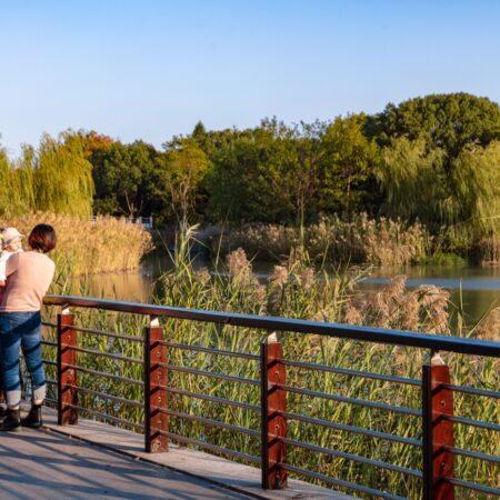 8-plat-studio-forest-park-overlook