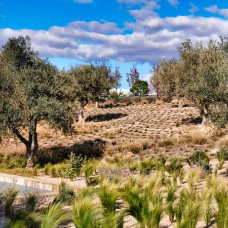 9 NEW GARDENS FOR THE FINANCIAL CITY OF BANCO SANTANDER