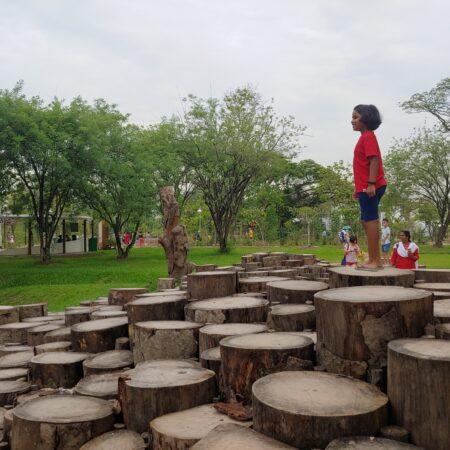 Biophilic Landscape Feature_Log Trail