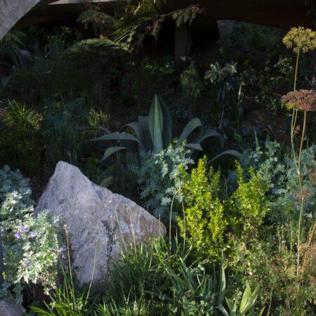 Estudio-Ome-Forest-garden-Nests house_111