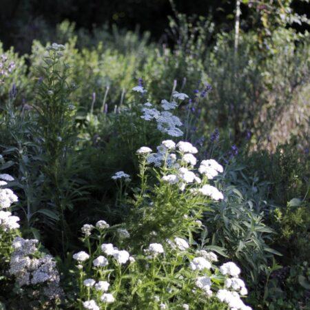 Estudio-Ome-Forest-garden-Nests house_114