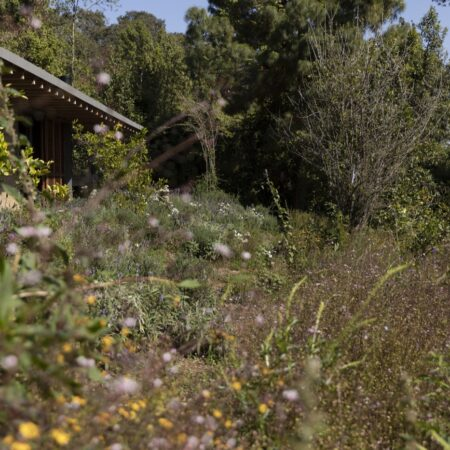 Estudio-Ome-Forest-garden-Nests house_115