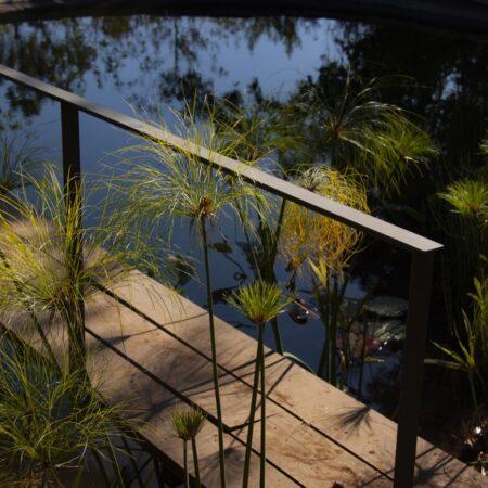 Estudio-Ome-Forest-garden-Nests house_117