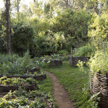 Estudio-Ome-Forest-garden-Nests house_118