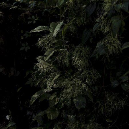 Estudio-Ome-Forest-garden-Nests house_15