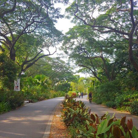 Existing Tree_ New Path