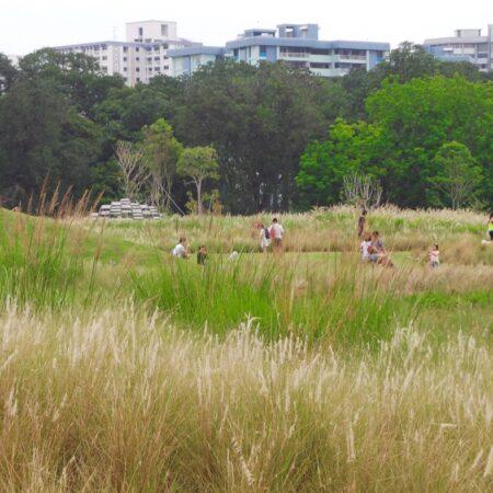 Grasslands_4