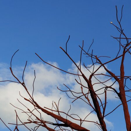 Lone Tree_2