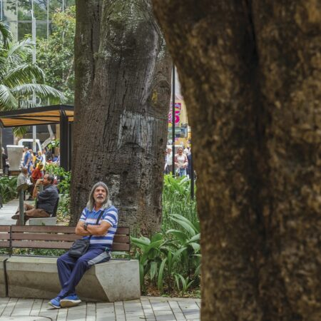 Medellin Downtown's Tropical and Built Landscape-6