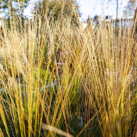 SOWATORINI Landschaft_Feld und Meer_autumn 2