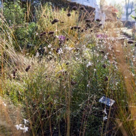 SOWATORINI Landschaft_Feld und Meer_autumn 4