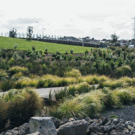 Taumanu Reserve (4)