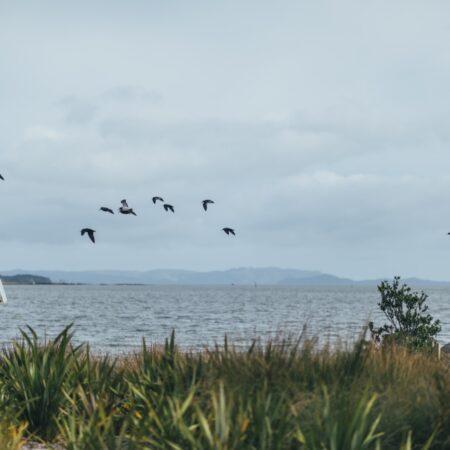 Taumanu Reserve (8)