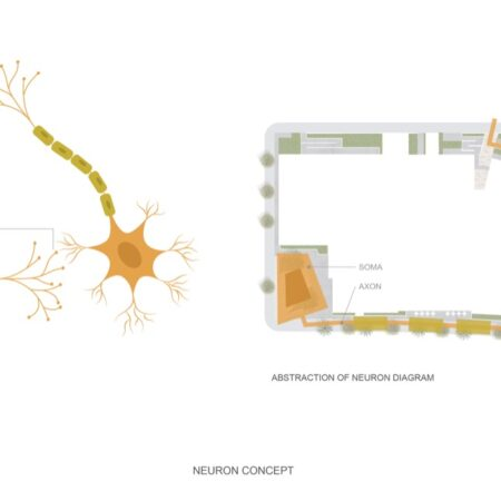 UCSF_Neuron diagram