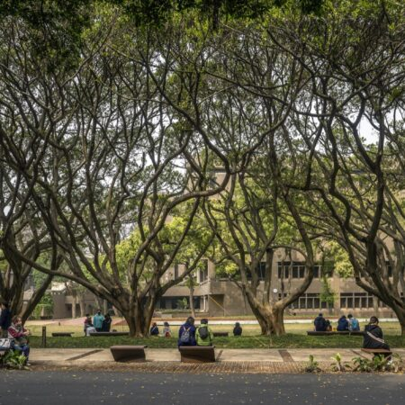 The project questions the restoration of the exterior spaces of a campus that has suffered from the degradation of time and the roots of large banyan trees. The design explores several modalities of porosity and hybridity between the inert and the living.