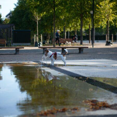 The Fountain Garden