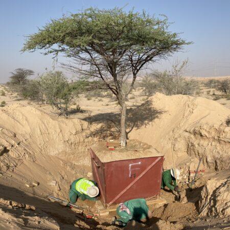 Al Fay Park 016_SLA Planting nurseries replanting ghaf tree