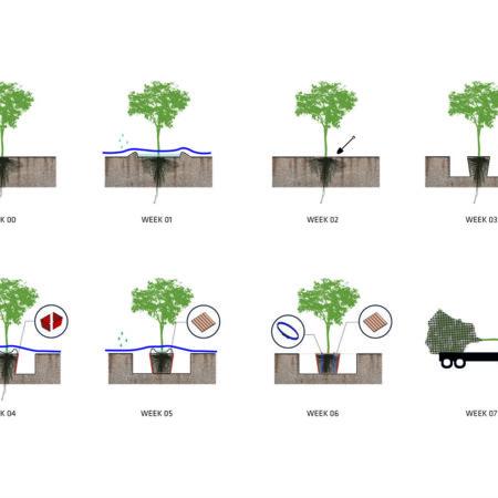 tree digging diagram