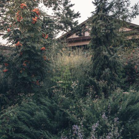 Burova-Julia-Bullys-Garden-2