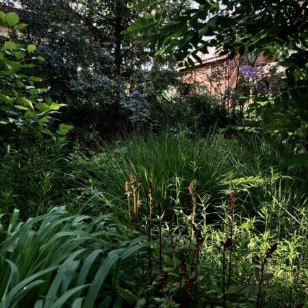 Burova-Julia-Bullys-Garden-20