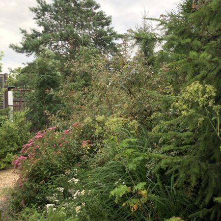 Burova-Julia-Bullys-Garden-21
