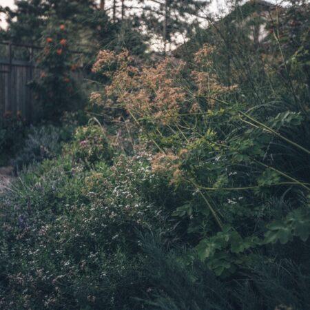 Burova-Julia-Bullys-Garden-6
