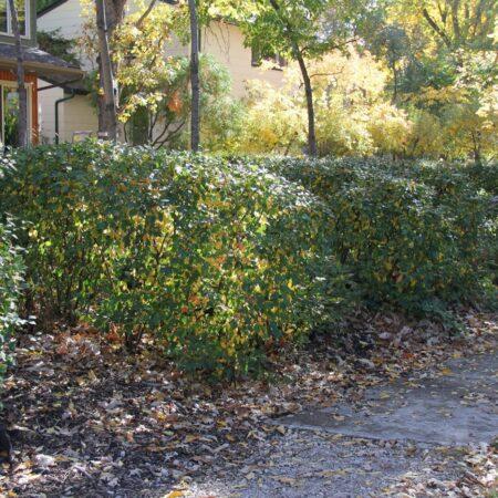 Sumac-Garden-Straub-Thurmayr-18