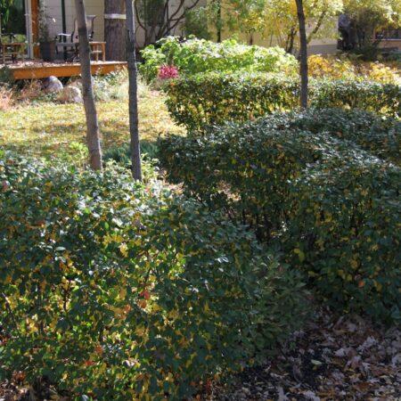 Sumac-Garden-Straub-Thurmayr-19