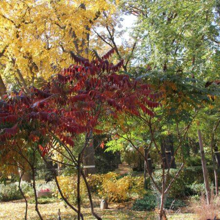 Sumac-Garden-Straub-Thurmayr-20