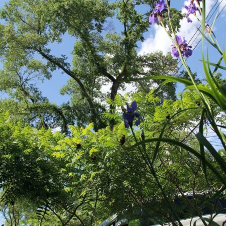 Sumac-Garden-Straub-Thurmayr-8